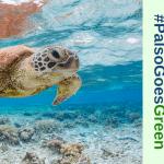 Καλοκαίρι και ενημέρωση για την προστασία θαλάσσιων ειδών! – #PalsoGoesGreen
